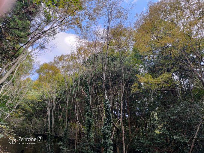 ZenFone 7 緑撮影
